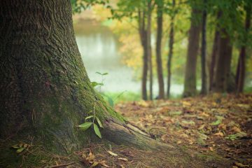prix abattage d un arbre