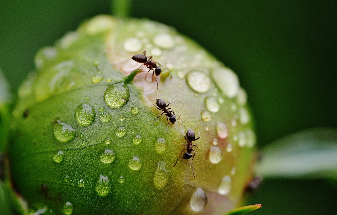 se debarrasser des fourmis jardin